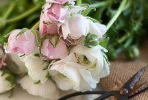 Flower shop / no pin limits..