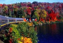 Fall leaves / Ontario