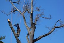 Craziest Tree Removals / We've been known to take care of any tree removal anywhere.  Here's some of our craziest feats.