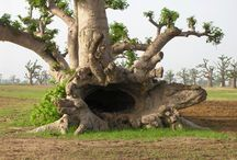Natura - alberi