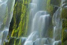 Oregon / by Rachel Hartwig