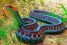 Nature Study: Reptiles