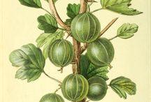Botanical Patterns-Drawings