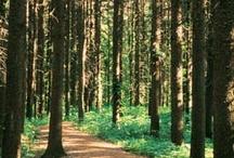Arboreta