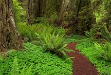 Ideas for the side yard path / This is the style, ideas and plants I want for the side yard path.
