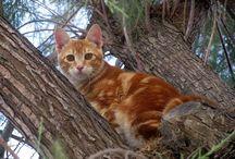 Dieren 3h6 / Zoek foto's waarin dierenspreekwoorden/uitdrukkingen (10 stuks)