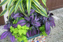 Office/indoor plants