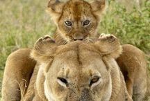 Cute Animals / by Annia Ibarra
