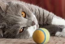 Kitties! / by Debbie Strnad