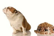Furry Family / Things for Animals / by Nicole Cordano