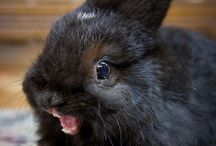 Adorable Bunnies / A collection of cute bunnies from around the web