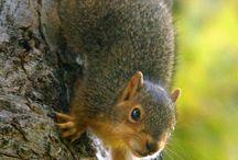 Photography - Animals - Squirrels ❤
