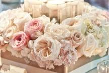 Rose cm