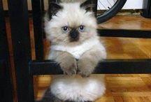 Kittens / Cute cat photos