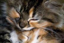 Cats / Fotografías de gatos. Cute pictures of cats.