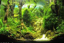driftwood aquarium