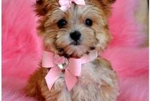 Cutie-Patootie!!