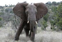 Wildlife Wonders / www.SafariExperts.com