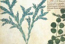 Medieval herbs