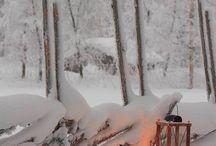 talvi ❄️