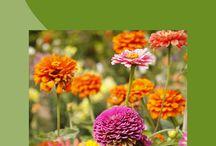 A Bouquet of Devotions / a book containing 50 unique devotions for 50 common flowers