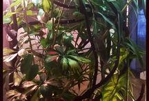 exo terra Jemen chameleon cage