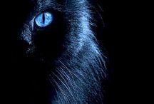 koty , kociaki i kocięta