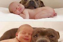 Hunde u. Babies