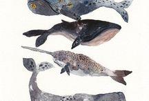 Baleines...