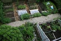 Gardening / by Lori Phillips