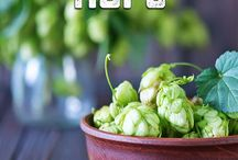 Plant Information & Brewing Tips / Plants are an important part of the brewing process.