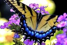Flowers, Butterflies, & Birds