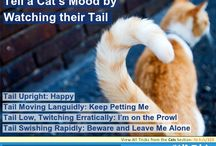 Cats - Hacks, Tricks and Tips / Looking for some great tips to care for your feline? Or maybe your looking for a trick to help you control your out of control alley cat. Well either way, you have came to the right place!