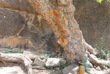 Holy trees - Tree of life - Hellige trær