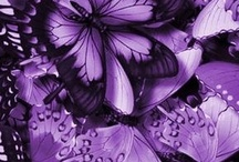 Purple for you / Viola ideale