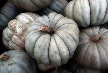 Queensland Blue / Queensland Blue is a much loved variety of pumpkin, down under. Happy pinning..no limits.. no blocking..❤️