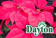 Holiday Plants / poinsettias, trees