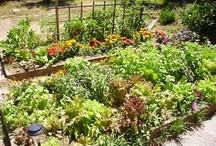 Gardening at the Homestead