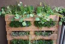 Garden Ideas / by Julie-Ann