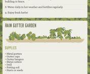 trädgård odling