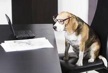 Pet Industry News