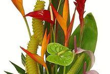 Flores Tropicalesjudith