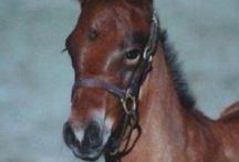 Pelham Equestrian Scene / by myPelham.com