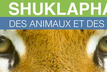 """My documentary """"Shuklaphanta, animals and people"""" / a wildlife documentary of Fabien Lemaire. We need you help for make this project, please go to kisskissbankbank.com/shuklaphanta-des-animaux-et-des-hommes and join us on facebook facebook.com/shuklaphantadesanimauxetdeshommes"""