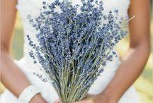 Clara lavender wedding