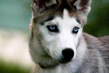 ANIMALS: beautiful animals