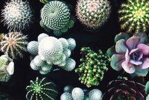 vetplanten en cactussen