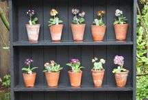 THEATRE FOR AURICULA FLOWERS
