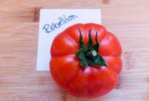 Gmias - Gemüse - Vegetables Rezepte / Alles rund ums Gemüse Rezepte und Interessantes - About Vegetables Recipes and Infos