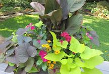 Gardening Interests